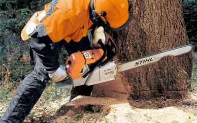 Спил деревьев, вывоз мусора - Астрахань, цены, предложения специалистов