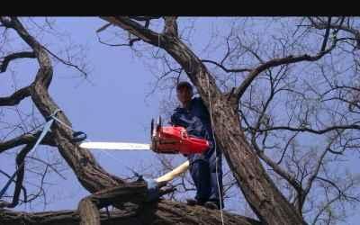 Спил веток.и деревьев - Астрахань, цены, предложения специалистов