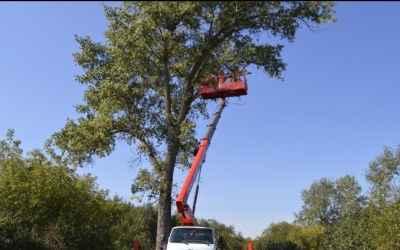 Спил, обрезка,опиловка деревьев - Астрахань, цены, предложения специалистов