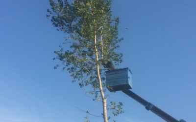 Спил,обрезка деревьев - Астрахань, цены, предложения специалистов