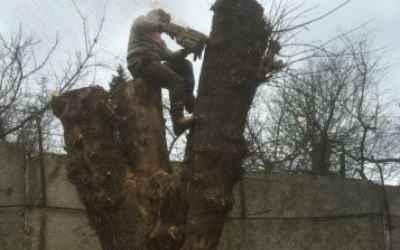 Спил и вырубка деревьев - Астрахань, цены, предложения специалистов
