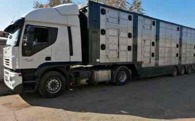 Услуги скотовоза (скотовоз) - Астрахань