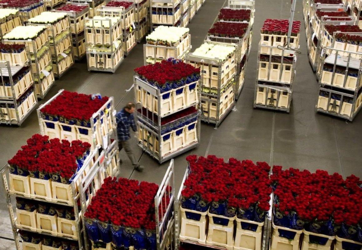 Прием заявок на перевозку цветов. Диспетчерская - Астрахань, цены, предложения специалистов