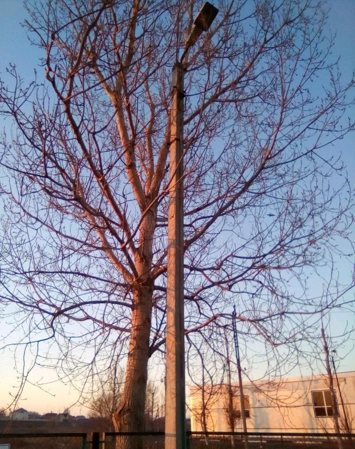 Спил деревьев вывоз корчевание небольшх садовых де - Астрахань, цены, предложения специалистов