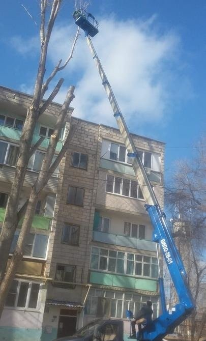Спил, обрезка деревьев, вывоз - Астрахань, цены, предложения специалистов