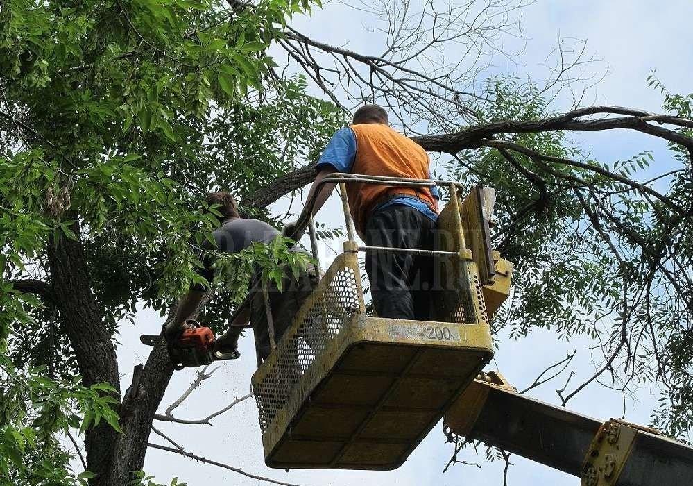 Спил, обрезка, опиловка деревьев, вывоз мусора - Астрахань, цены, предложения специалистов